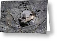 Male River Otter Greeting Card