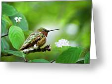 Male Ruby-throated Hummingbird At Rest Greeting Card