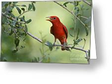 Male Summer Tanager Greeting Card
