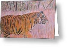 Adult Male Tiger Of India Striding At Sunset  Greeting Card