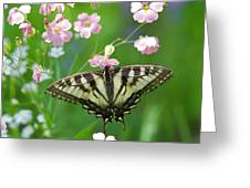 Male Tiger Swallowtail 5416 Greeting Card