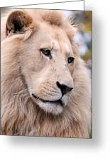 Male White Lion ... Thabo Greeting Card