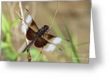 Male Widow Skimmer Dragonfly #3 Greeting Card
