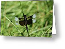 Male Widow Skimmer Dragonfly #4 Greeting Card