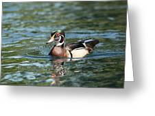 Male Wood Duck Greeting Card