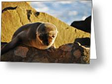 Malibu California Baby Sea Lion Greeting Card