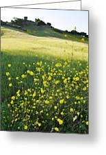 Malibu Creek Wildflowers Greeting Card