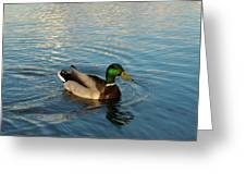 Mallarad Duck 1 Greeting Card