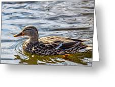 Mallard 2 Greeting Card