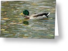 Mallard Among The Fallen Leaves Greeting Card
