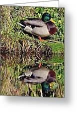 Mallard And Reflection Greeting Card