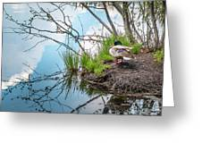 Mallard At Silver Lake Greeting Card