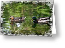 Mallard Couple On A Pond Greeting Card