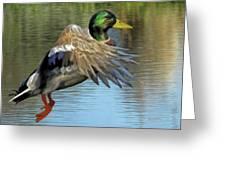Mallard Digital Freehand Painting 3 Greeting Card
