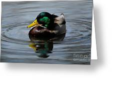 Mallard Duck Drake I Greeting Card