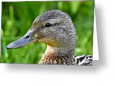 Mallard Duck Female Greeting Card