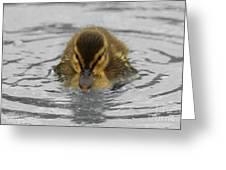 Mallard Duckling Greeting Card
