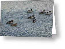 Mallard Ducks In Pond 2 Greeting Card