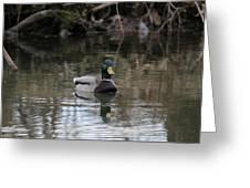 Mallard Ducks Greeting Card