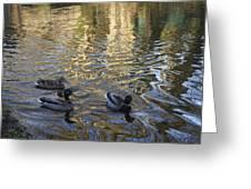 Mallard Ducks On The Canal #1107 Greeting Card