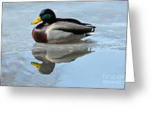 Mallard Duck Drake On Ice II Greeting Card