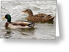 Mallard Duo Greeting Card