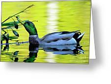 Mallard Eating Seed Pod 2 Greeting Card