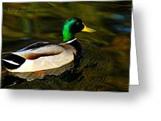 Mallard Green Greeting Card