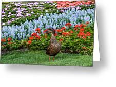 Mallard In The Garden Greeting Card