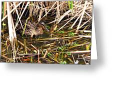 Mallard Mama With Duckling Greeting Card