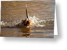 Mallard Mating Dance Greeting Card