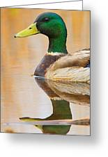 Mallard Mirror Greeting Card