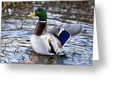Mallard Moment Greeting Card