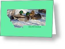 Mallard Montana Greeting Card