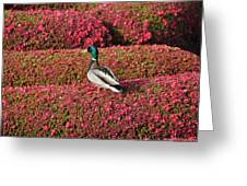 Mallard On A Floral Carpet Greeting Card