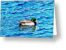 Mallard On Water Greeting Card