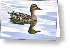 Mallard Reflections Greeting Card