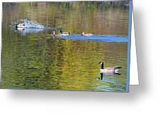 Mallard Splash Landing Greeting Card