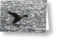 Mallard Twilight Landing Greeting Card