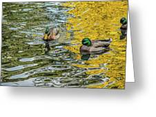 Mallards On Golden Pond 3 Greeting Card