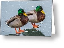 Mallards On Ice Greeting Card