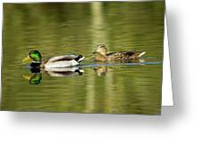 Mallards On The Lake Greeting Card