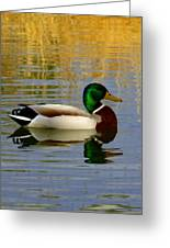 Mallord Duck Greeting Card