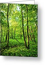 Mallory Woods Greeting Card
