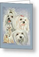 Maltese Collage Greeting Card