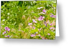 Malva And Chamomile In The Meadow Greeting Card