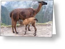 Mama And Baby Greeting Card