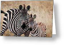 Mama And Baby Zebra Greeting Card
