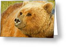 Mama Bear Close Up Greeting Card