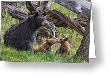 Mama Black Bear With Cinnamon Cubs Greeting Card